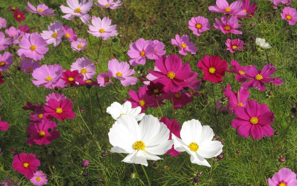 flowers-1282114_1280